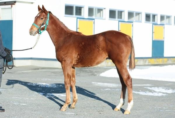 12月 12月 11月 ■先月へ | 最初 管理報告【MTTC 三石軽種馬共同育成センター】